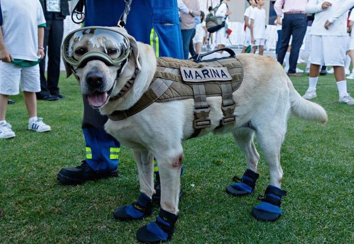 Tener los zapatos del binomio canino es un honor. (Contexto)