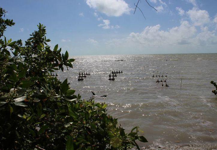 Quintana Roo, Campeche y Yucatán buscan recursos para llevar a cabo actividades de reforestación. (Ángel Castilla/SIPSE)
