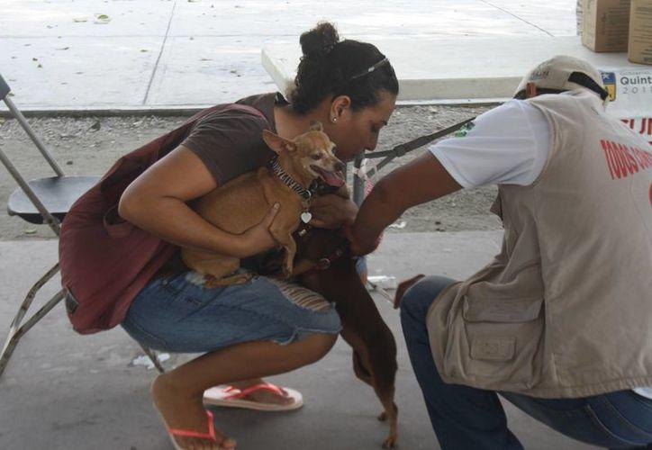 Durante el año pasado  hubo un número no registrado de ataque de perros a infantes y personas adultas porque deambulan en las calles sin ningún control. (Sara Cauich/SIPSE)