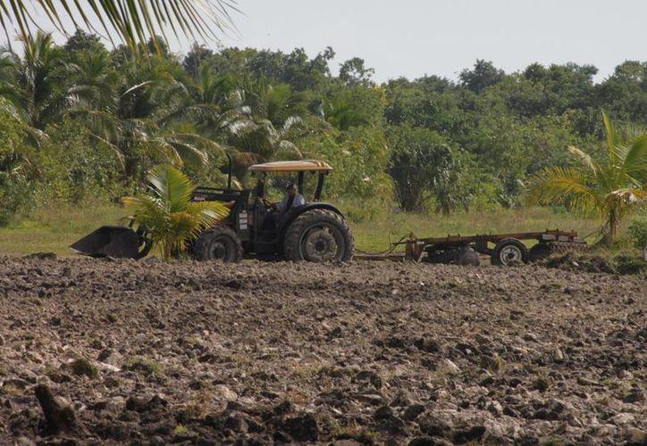 La Unión de Campesino pide que se mejoren los apoyos del campo. (Redacción/SIPSE)