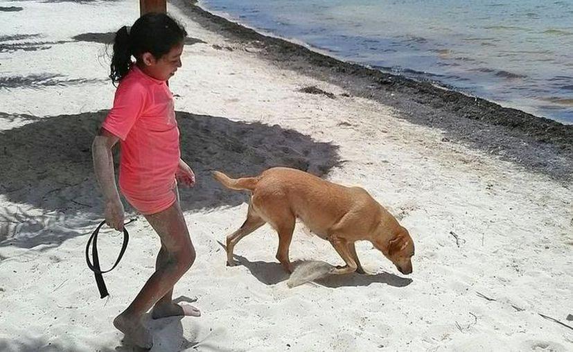 Crece el número de personas que buscan viajar con su perro. (Redacción)