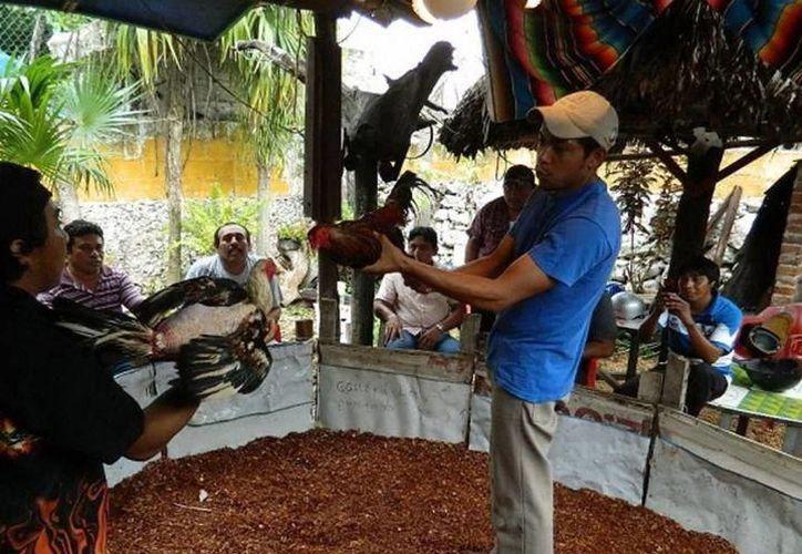 Para la Comisión de Derechos Humanos del Estado de Yucatán, las peleas de gallos promueven la violencia. (Foto: Archivo/SIPSE)