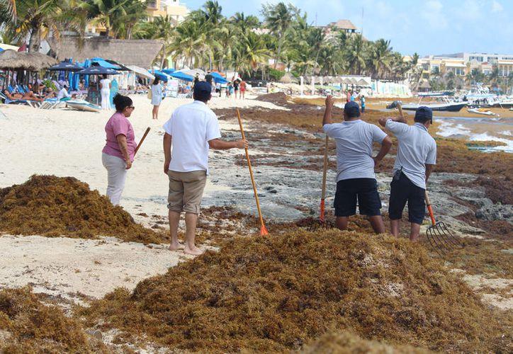 Algunos turistas se van descontentos por el problema del sargazo, aseguran prestadores de servicios. (Foto: Adrián Barreto)