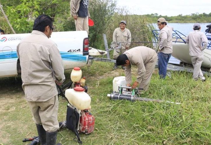 Alrededor de 80 personas trabajan para combatir el dengue. (Harold Alcocer/SIPSE)