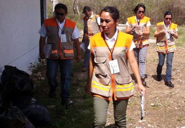 Imagen de los estudiantes voluntarios de la Uady durante una actividad ambiental. (Milenio Novedades)