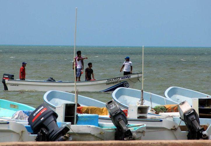 Pescadores autorizados salen a la mar en busca de pepino en costas yucatecas. (Milenio Novedades)