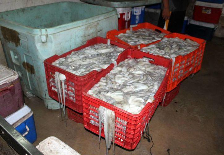 La baja captura de pulpo elevó el precio del molusco.(Gerardo Keb/SIPSE)