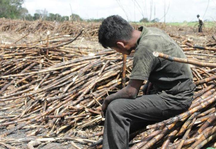 A partir de la zafra 2012-2013 la deuda de productores cañeros con el ingenio San Rafael de Pucté alcanzó un máximo de 150 millones de pesos. (Edgardo Rodríguez/SIPSE)