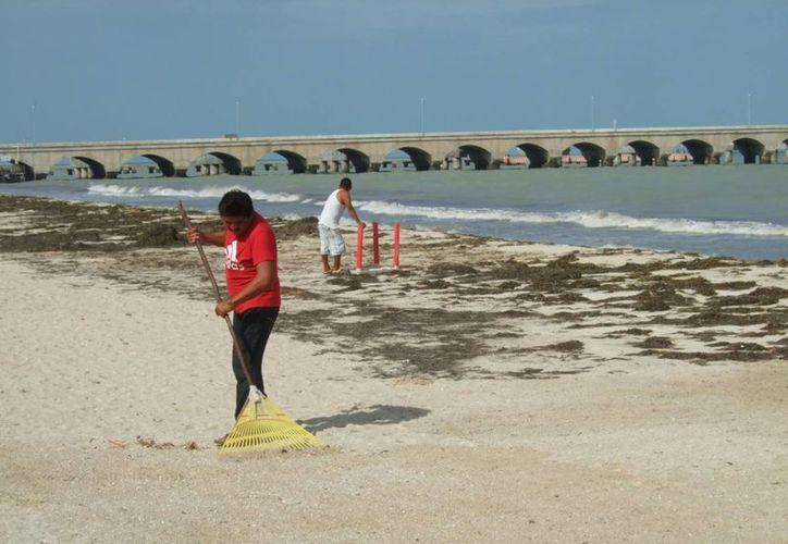 La limpieza de playas es una de las maneras a través de las cuales la Semarnat apoya económicamente a familias a través de empleo temporal. (SIPSE/Foto de contexto)