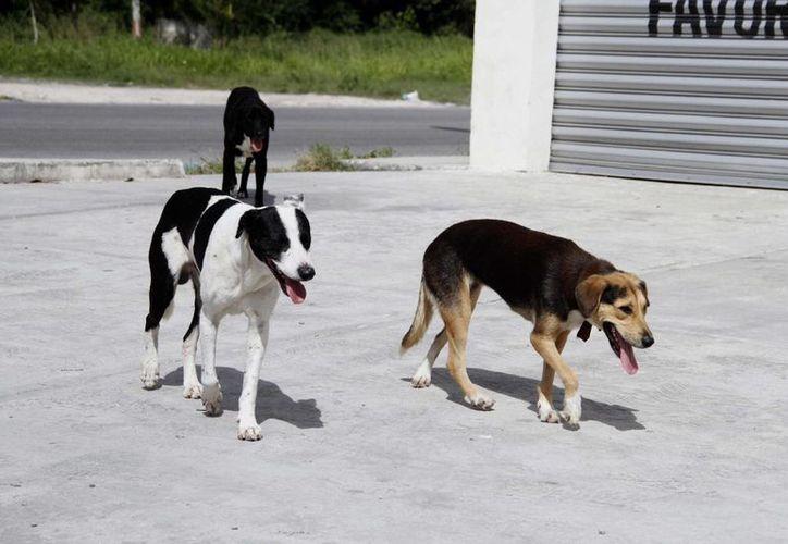 La aplicación también cuenta con una opción para que un perro en situación de calle encuentre un hogar. (Tomás Álvarez/SIPSE)