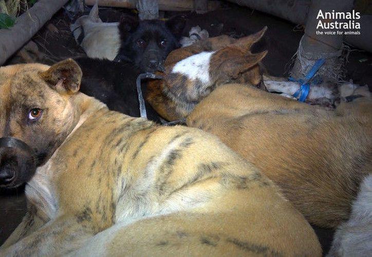 La investigación revela que ciertas 'pandillas' en la isla atrapan tanto a perros callejeros como a mascotas para luego transportarlos en bolsas hasta sucios sitios de matanza. (RT)