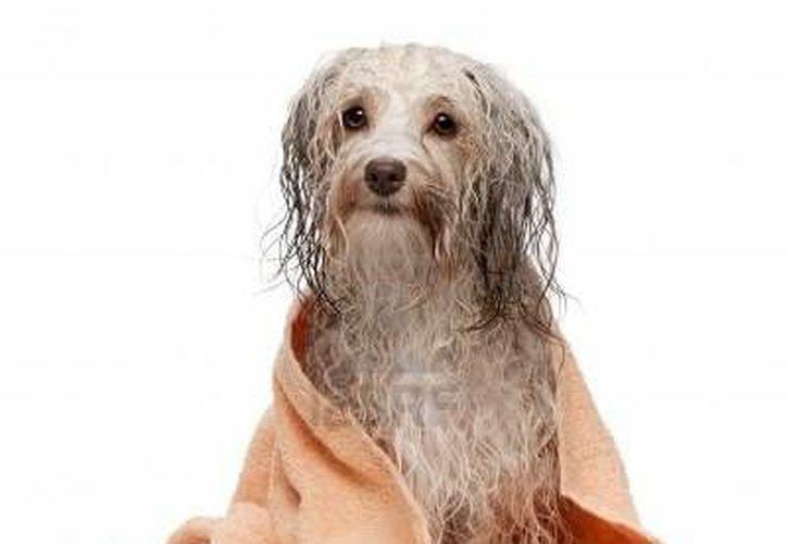 Bañar a tu perro con agua tibia y un jabón suave para platos puede ayudar a quitarle las pulgas. (Contexto/Internet)