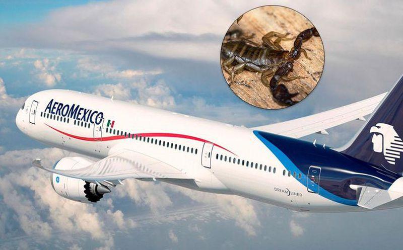 Escorpión pica a pasajero en vuelo de México a Chicago