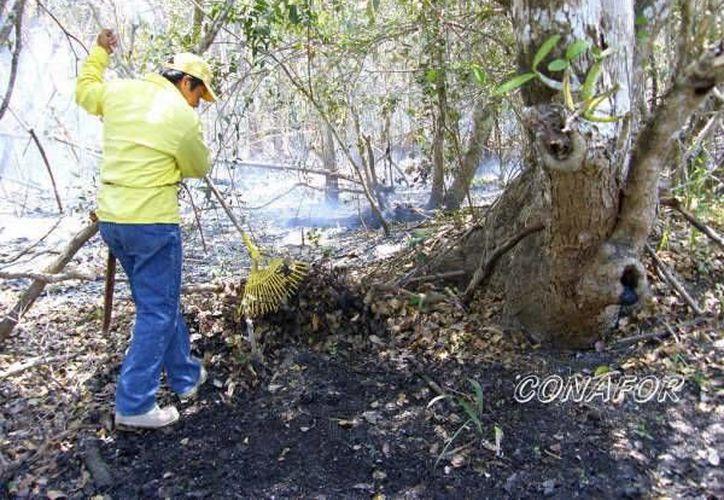 Se suscitaron conatos de incendio en los municipios de Lázaro Cárdenas y Bacalar, pero estos lograron ser extinguidos. (Omar Capistrán/SIPSE)