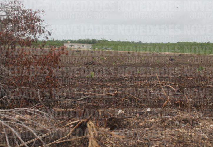 La comunidad está dedicada al cultivo de tierras en el sur del estado.  (Carlos Castillo/SIPSE)
