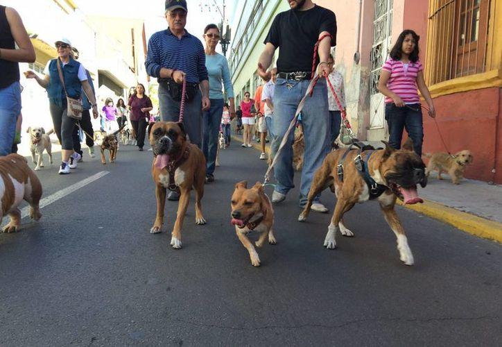 Manifestantes en Cuernavaca propusieron la creación de una policía para animales o un centro especial que proteja estos seres vivos, a través de sanciones a quienes los maltraten, pero también que fomente y coadyuve en el rescate de animales callejeros. (Foto de contexto de Notimex)