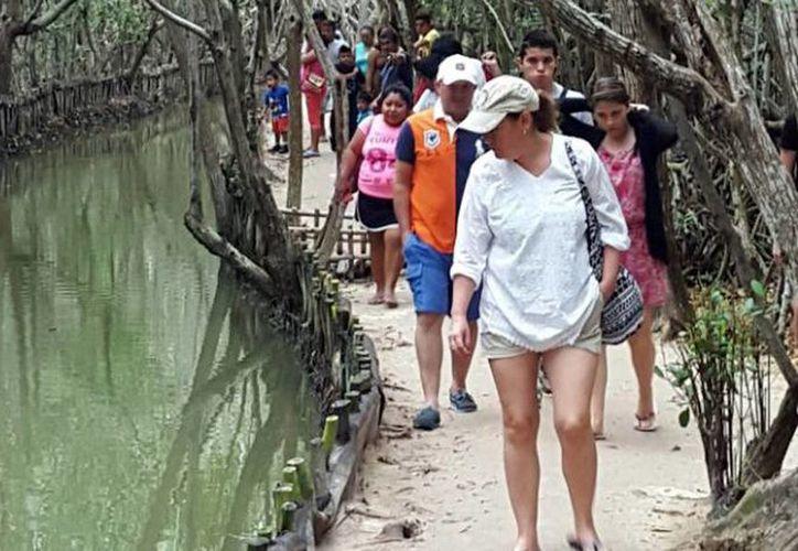 El Corchito registró 11 mil 584 visitantes, solo después de Chichén Itzá que tuvo una entrada de 64 mil 647 turistas. (Milenio Novedades)