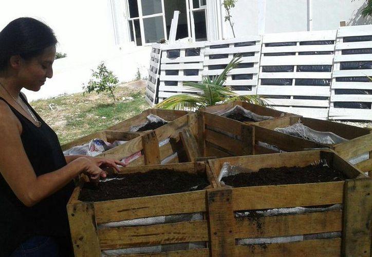 El eco-huerto vertical está hecho con materiales reciclados. (Israel Leal/SIPSE)