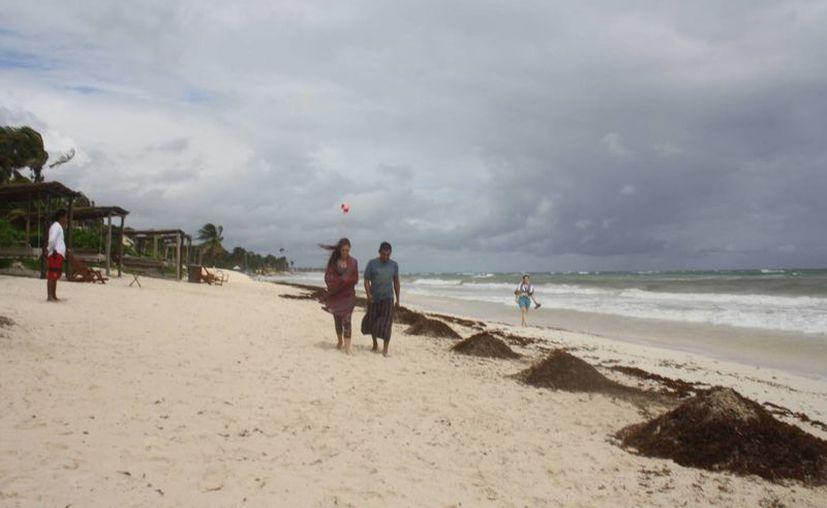 Algunos centros de hospedaje planean colocar barreras para evitar el arribo de sargazo a sus playas. (Sara Cauich/SIPSE)