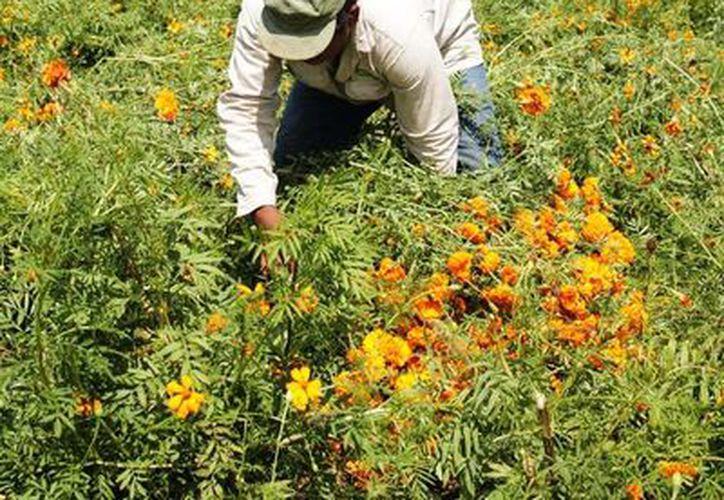 Tratan de preservar y conservar la biodiversidad local. (Claudia Martín/SIPSE)