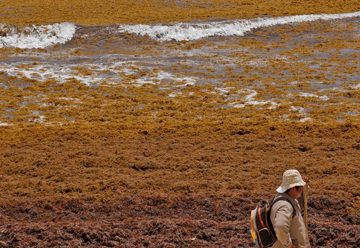 Todavía es prematuro saber los daños que el sargazo dejará a la actividad turística. (Paola Chiomante/SIPSE)