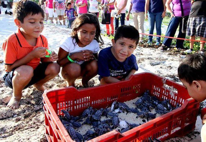 Los niños participaron en la liberación de las tortuguitas para crear conciencia sobre sau conservación. (Redacción/SIPSE)