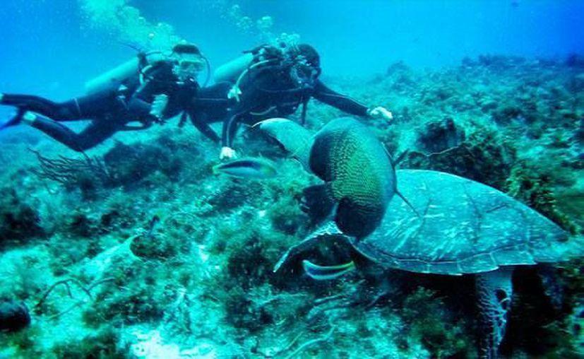 La pareja practicó buceo en el arrecife Palancar de Cozumel. (Instagram)