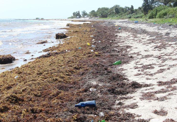 La mayoría de la basura que recala proviene de las Islas del Caribe, como Trinidad y Tobago, Jamaica, Cuba, además de Europa y Japón y otros continentes. (Joel Zamora/SIPSE)