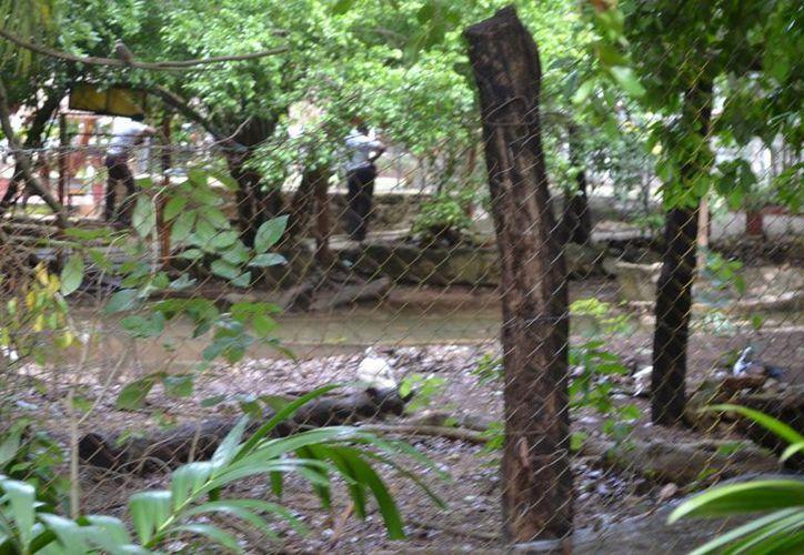 El encargado del parque solicitó ayuda para encontrara al cocodrilo. (Redacción/SIPSE)