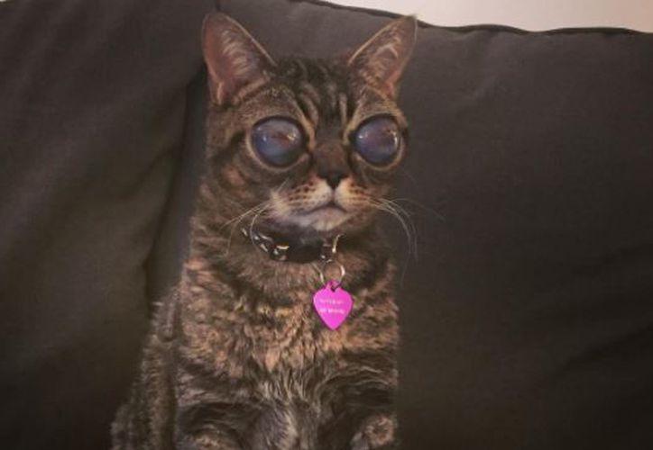 Matilda se volvió popular por sus enormes ojos en Instagram, donde la comparan con el gato de Shrek. (Foto: Instagram)