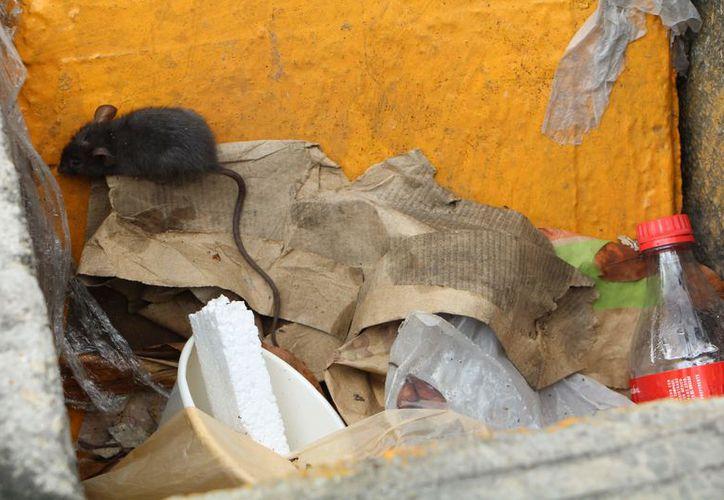 Son pocas las denuncias en las que se pueden comprobar la presencia de roedores o insectos. (Paola Chiomante/SIPSE)