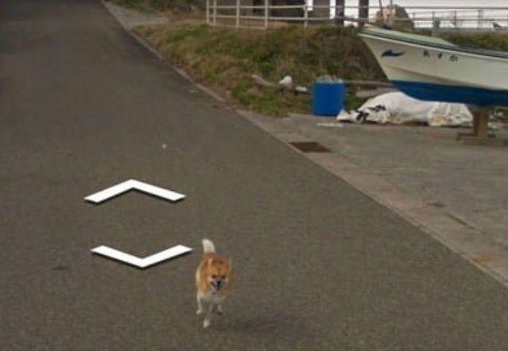 El perrido persiguió por varios metros el automóvil que tomaba las fotografías panorámicas. (debate.com)