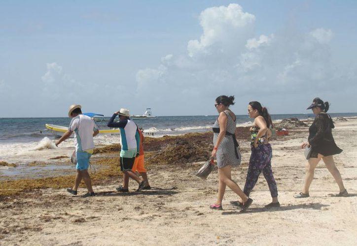 La presencia del sargazo desanima a algunos vacacionistas, quienes prefieren ir a los cenotes. (Sara Cauich/SIPSE)