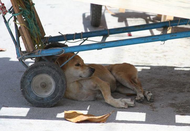 Asociaciones civiles apoyarán en caso de requerirse asilo para los animales. (Foto: SIPSE)