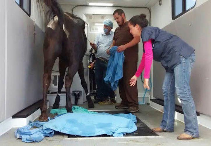 La FMVZ lleva a cabo una importante labor altruista en beneficio de animales de producción, de trabajo y de compañía, así como de sus propietarios. (Sin Embargo)