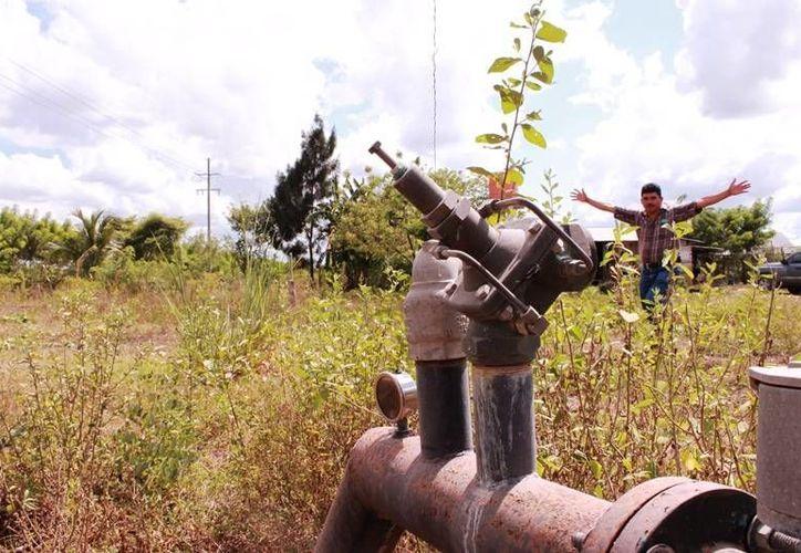 El saqueo por parte de los ladrones merma la productividad del sector. (Edgardo Rodríguez/SIPSE)