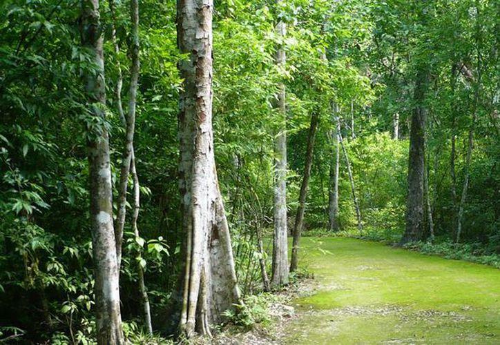 La Selva Maya está ubicado entre la Reserva de la Biosfera de Sian Ka'an, Calakmul y Bala'an  K'aax. (Redacción/SIPSE)