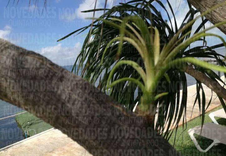 El ácaro rojo está afectando a las palmeras principalmente. (Redacción)