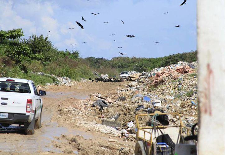 """Santana Duarte explicó que el tema del basurero se ha convertido en una """"bola de nieve"""" por falta de recursos. (Harold Alcocer/SIPSE)"""