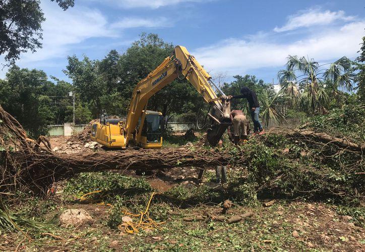 La demolición de árboles ocasiona molestias en habitantes de la comunidad. (Foto: Adrián Barreto)