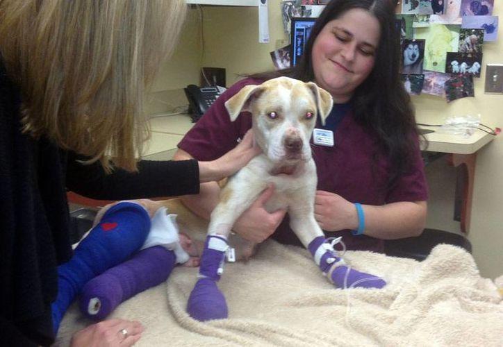 El perro, amarrado a la camioneta de su amo, tuvo que correr con las patas traseras. Afortunadamente ya se recuperó. (foxcarolina.com)