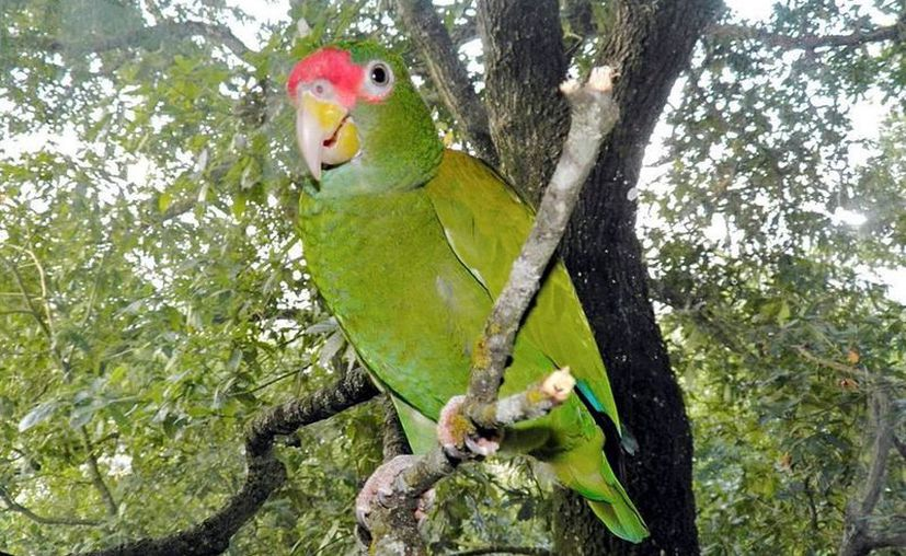 """con la """"lejanía"""" de los ciudadanos en las calles, las especies de aves se han """"acercado"""". (Foto de contexto/elnorte.com)"""
