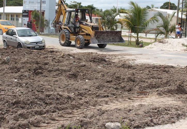 Las autoridades advierten que el sargazo no es apto para usarse como relleno. (Ángel Castilla/SIPSE)