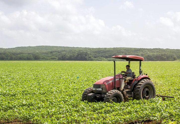 Consideran que la obra beneficiará a 12 mil productores del campo. (SIPSE)