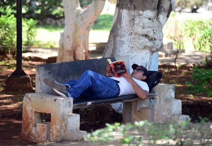 Meridanos buscan la sombra para apaciguar las altas temperaturas que se han registrado al mediodía. (Luis Pérez/SIPSE)
