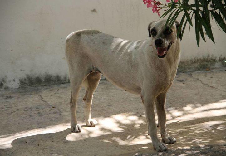Llegaron ciudadanos con más de tres perros. (Tomás Álvarez/SIPSE)