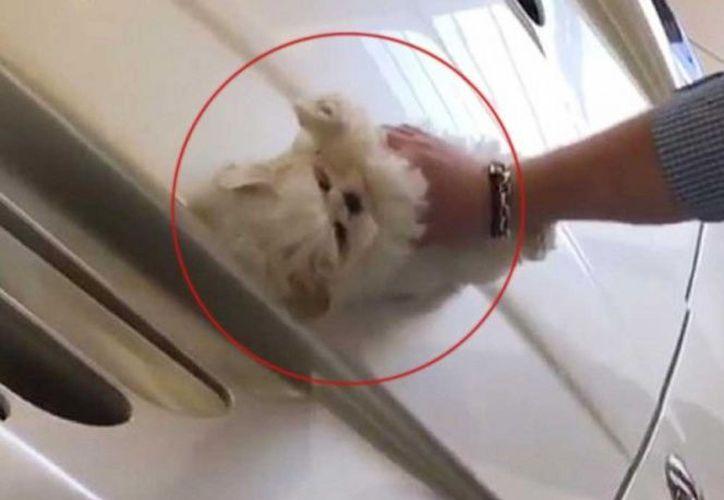 La descripción del video decía que la'única forma de limpiar este auto es con pelaje de cachorro'. (Excélsior)