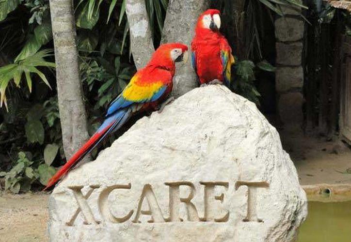 El Grupo Experiencias Xcaret, acerca a los estudiantes para que realicen su servicio social en una de sus empresas. (Contexto/Internet)