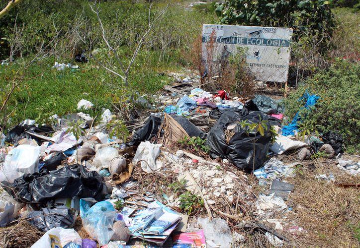 """En el puerto de Progreso, se generan, en promedio diario, 50 toneladas de basura, pero no toda llega al basurero municipal: una buena cantidad """"se queda"""" en las calles e incluso en la ciénaga. (Gerardo Keb/SIPSE)"""