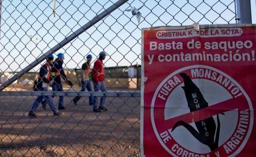 Monsanto aseguró que el glifosato, químico usado en sus pesticidas, es una sustancia segura. (Agencias)